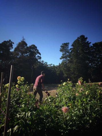 Our Family - Chris - fleurs de lyonville