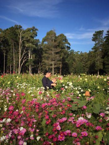Our Family - Janae - fleurs de lyonville