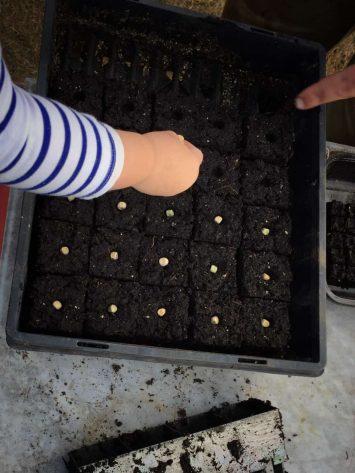 Our Farm Seed Sowing - fleurs de lyonville