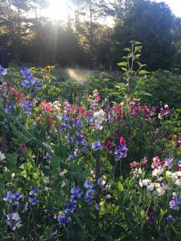 Our Farm Water - fleurs de lyonville