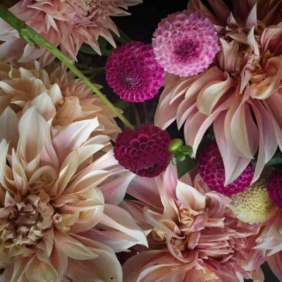 our flowers - fleurs de lyonville